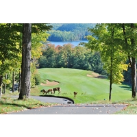 Deer graze with the scenic sixth hole at Bigwin Island Golf Club in Baysville, Ontario.